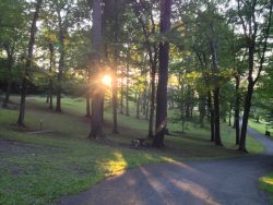 wooded area with sun coming through the trees
