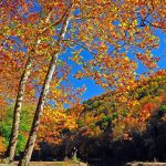 Help-us-track-autumn's-arrival-in-WV-Post-your-latest-fall-foliage-photos-to-the-MyWV-Fall-Color-M